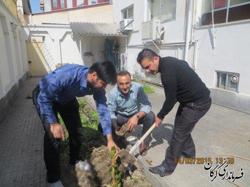 کاشت سه اصله نهال در استاندارد گلستان