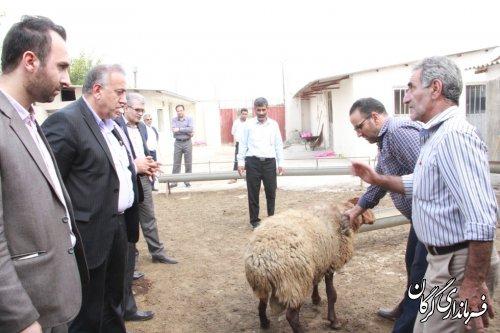 بازدید سرپرست فرمانداری شهرستان گرگان از شرکت تعاونی گوسفندداران شهرستان