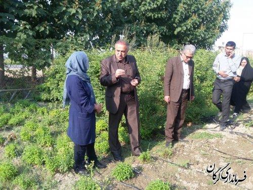 بازدیدسرپرست فرمانداری شهرستان گرگان از مجتمع گلخانه بستانه