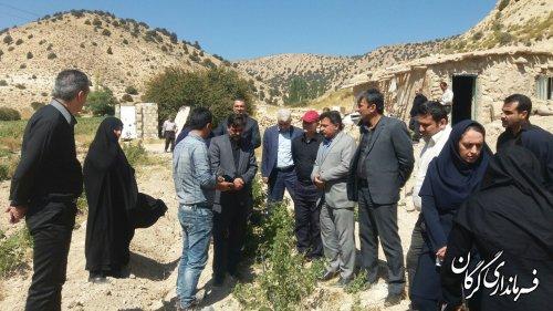 کاشت زعفران و گل محمدی در دستور کار روستاهای کوهپایه ای شهرستان گرگان قرار میگیرد