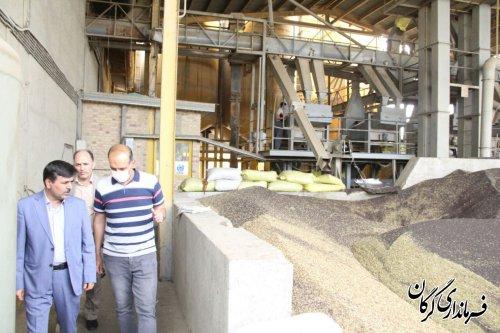 ۵۰درصد از محصول کلزا کشاورزان شهرستان تاکنون خریداری شده است